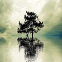 Incomprensión y aislamiento - Enfermedad y emociones - Significado emocional de las enfermedades físicas crónicas. Enfermedad crónica